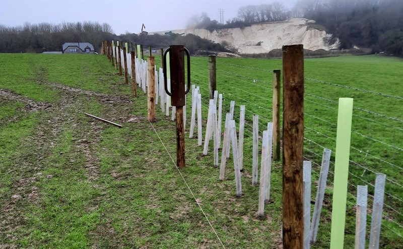 hedge planting winter Isle of Wight_77407