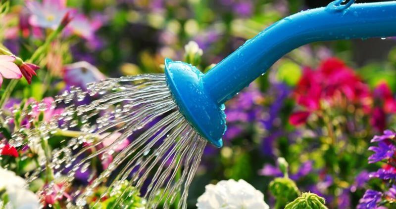 Watering plants in the garden_67716