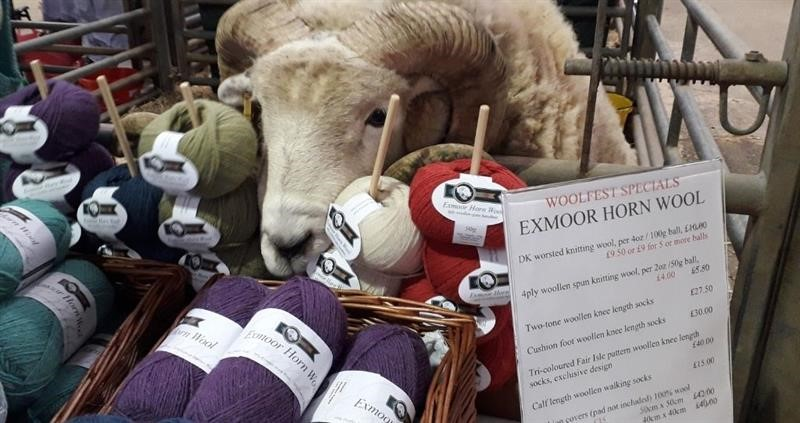 Exmoor wool_74991