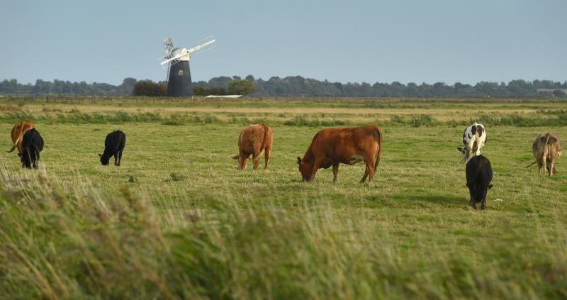 Norfolk 100 - Halvergate Marshes_58608