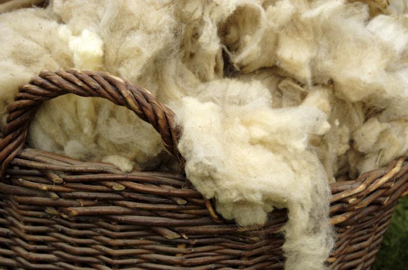 basket of raw wool_7816