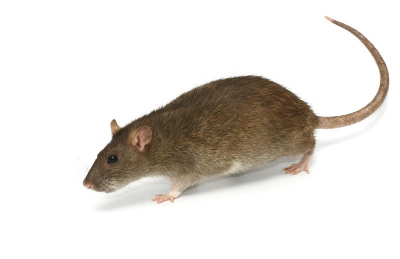 Rodenticide users reminded of legal obligations