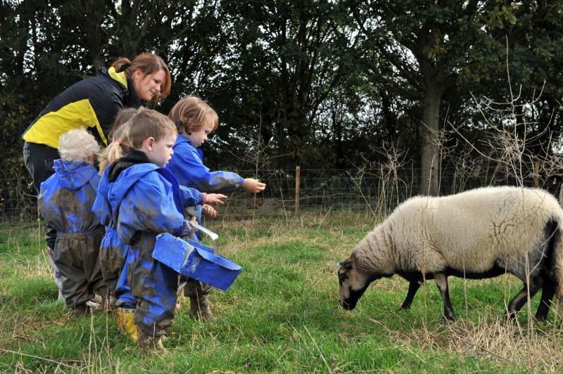 Brue Farm and Nursery_14430