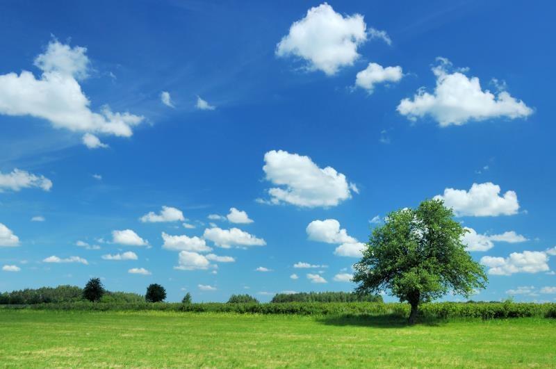 Tree in field_7577