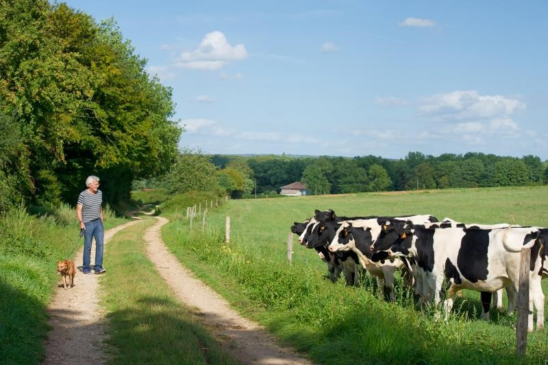 NFU calls for temporary diversions where livestock are present on rights of way