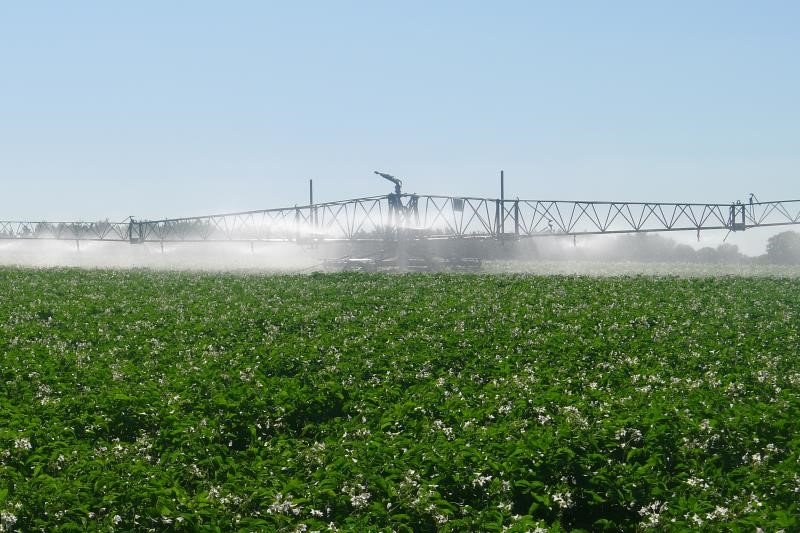 Potato irrigation_36216