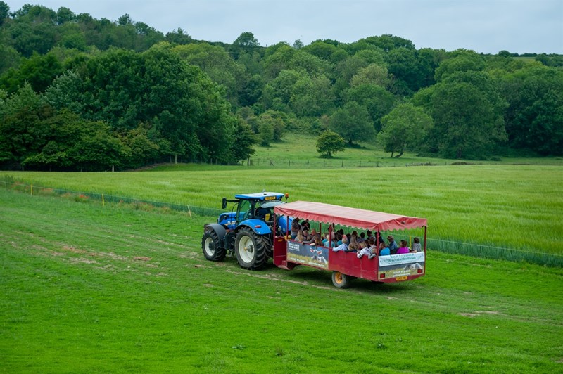 Open Farm Sunday_78553