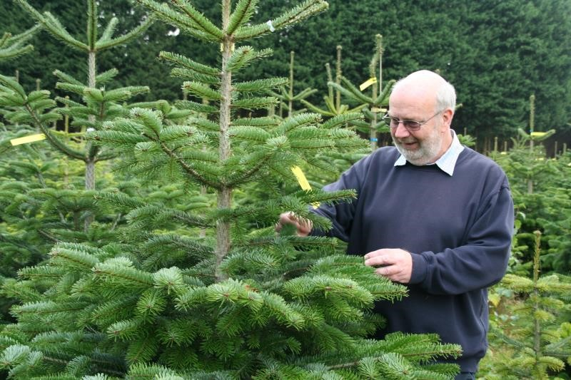 Our guide to buying a British Christmas tree