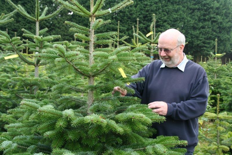 Rougham Estate trees_11505