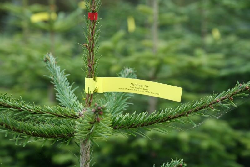 Change to November lockdown restrictions on Christmas tree sales