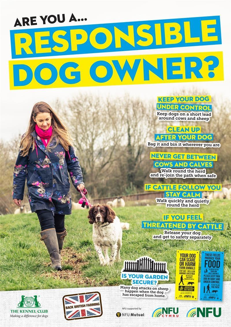 Responsible dog walking poster 2019_64617