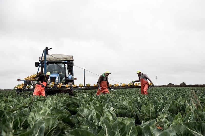 Brassica farm in Cornwall - David Simmons, Horticulture magazine_60801