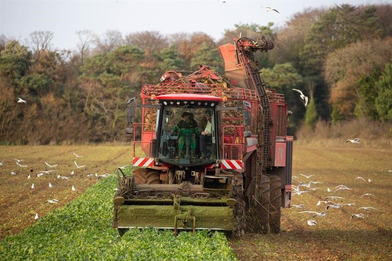 Suffolk and Norfolk beet growers: Join the Soils for Sugar project