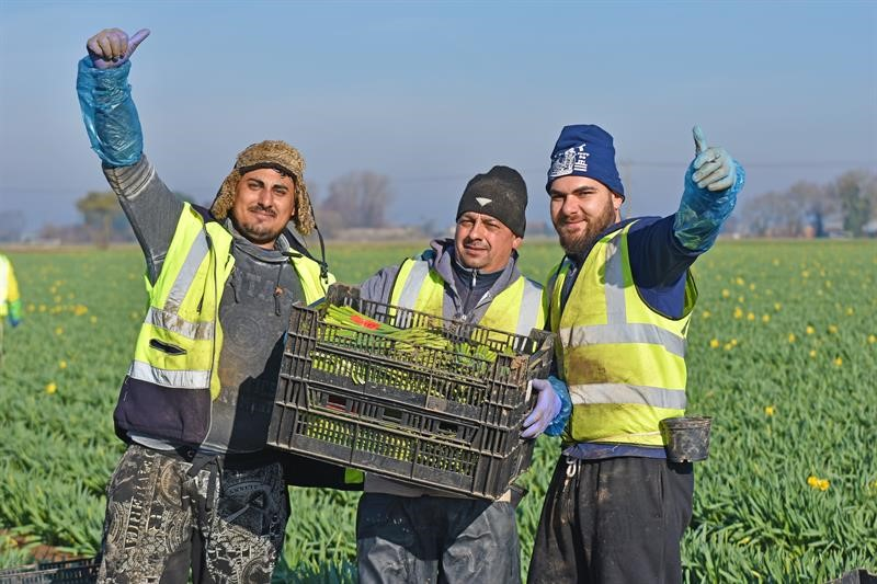 Workers at Taylors Bulbs Holbeach Lincolnshire_65674