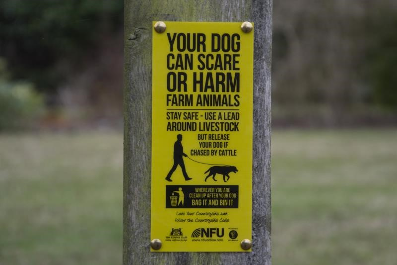 Dog Walking Sign 2015_27363