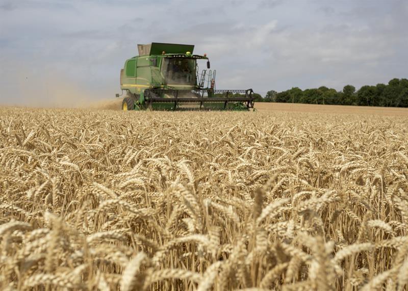 Wheat harvest Tom Martin farm_64349