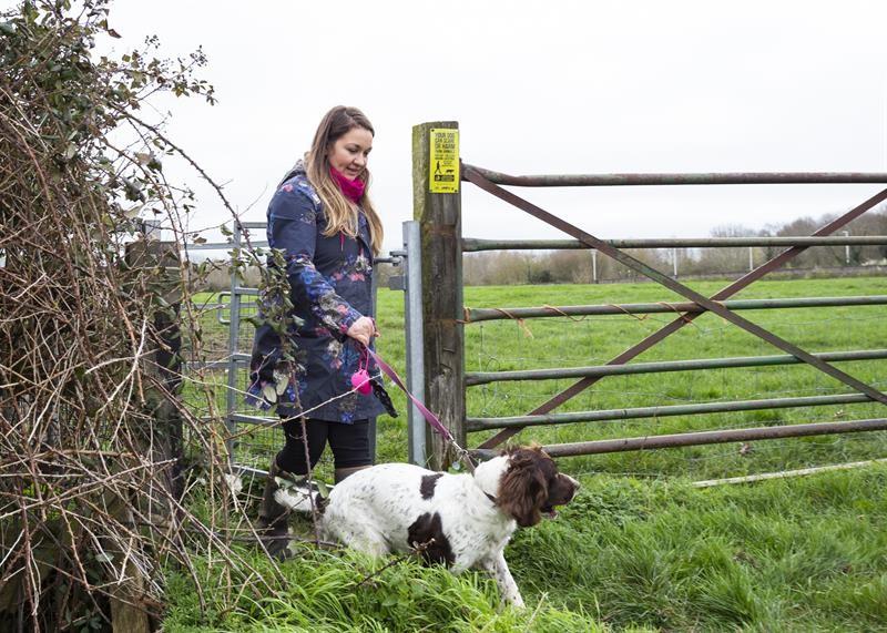 Dog walking through gate_63962