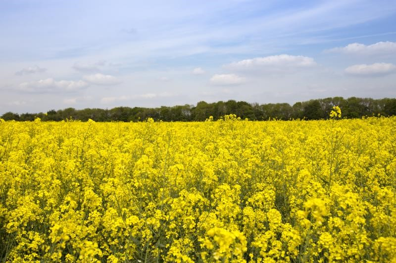 NFU expert insight: Another week, another study on pesticides and bees