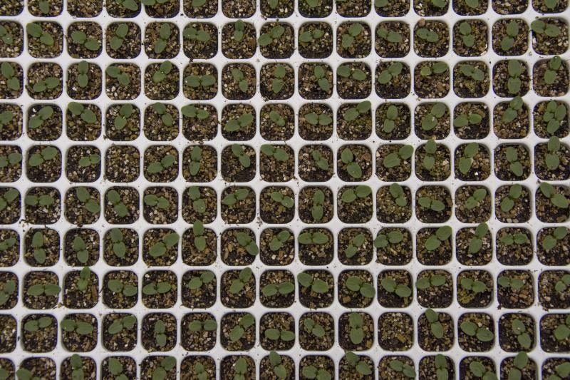 Seed tray_35587
