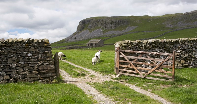The Yorkshire Dales_79878