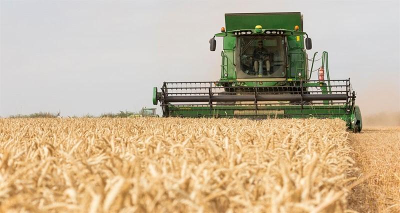 Wheat Harvest Tom Martin's Farm_77351