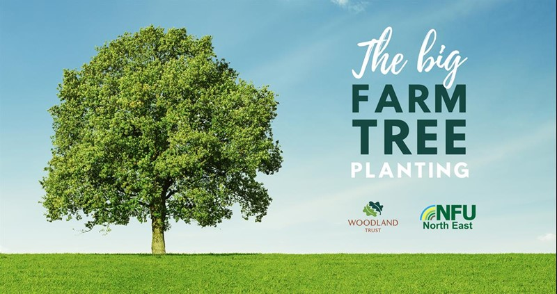 Big Farm Tree Planting graphic_75129