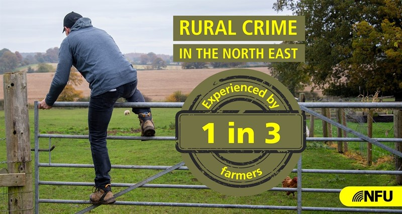 Graphic showing crime incidence in the North East_77931