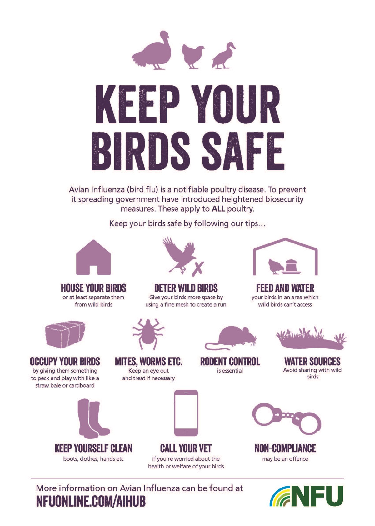 Poultry biosecurity infographic_75562