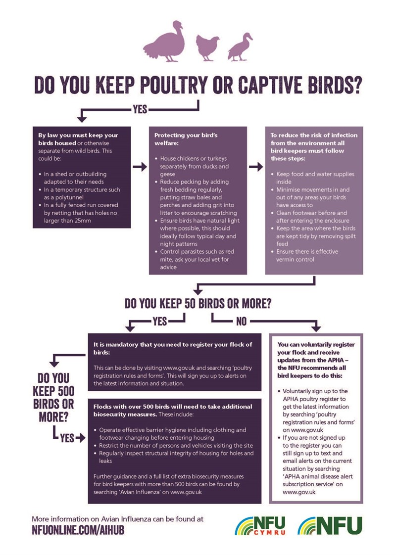 Avian Influenza flow chart - December 2020_76377
