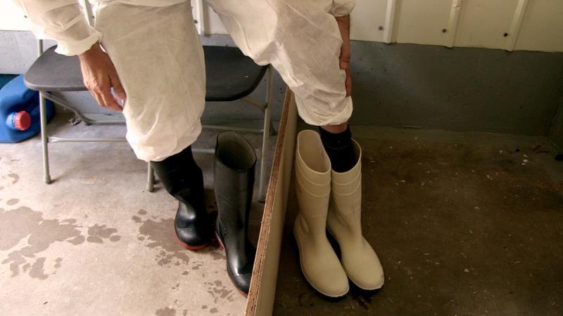 Avian Influenza biosecurity measures - change boots_40437