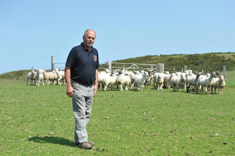glyn davies with sheep_80560