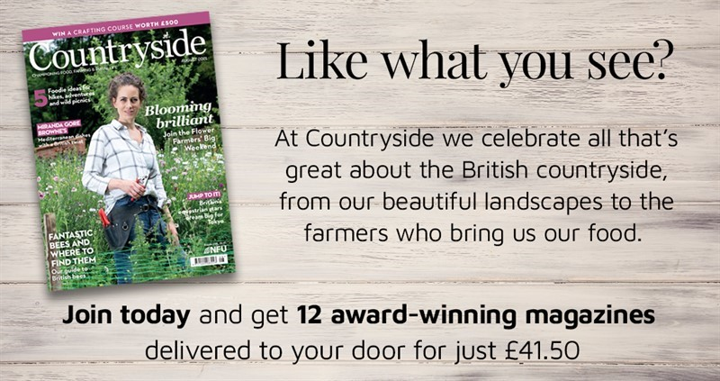 Countryside magazine advert for Countryside Online_80030