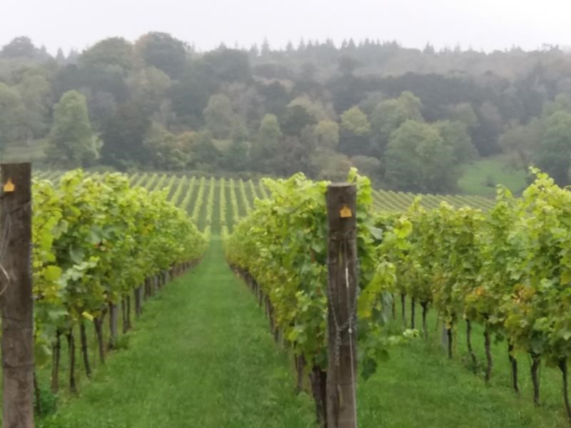 New viticulture consortium gets growing
