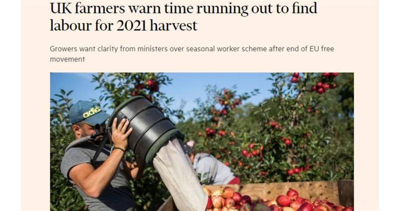 Financial Times, seasonal labour_75821