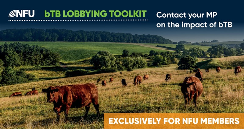NFU bTB Lobbying Toolkit: Contact your MP on the impact of bovine TB