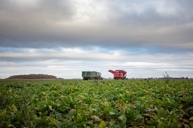 Britain - Sugar beet harvest_76245