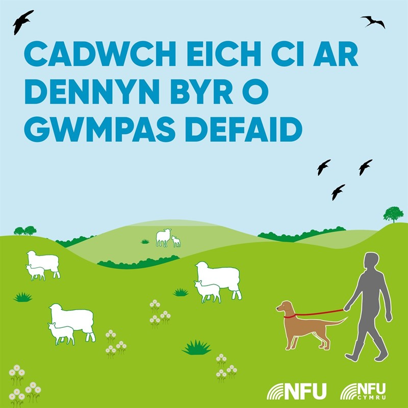 Keep your dog on a short lead infographic 2 - WELSH