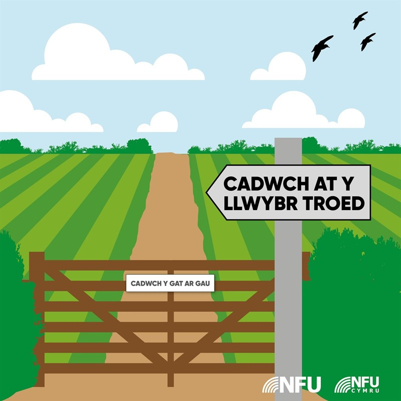 Keep to the footpath infographic - WELSH