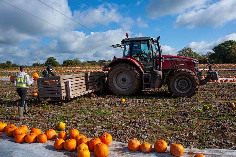 Britain - Pumpkin Harvest_75328