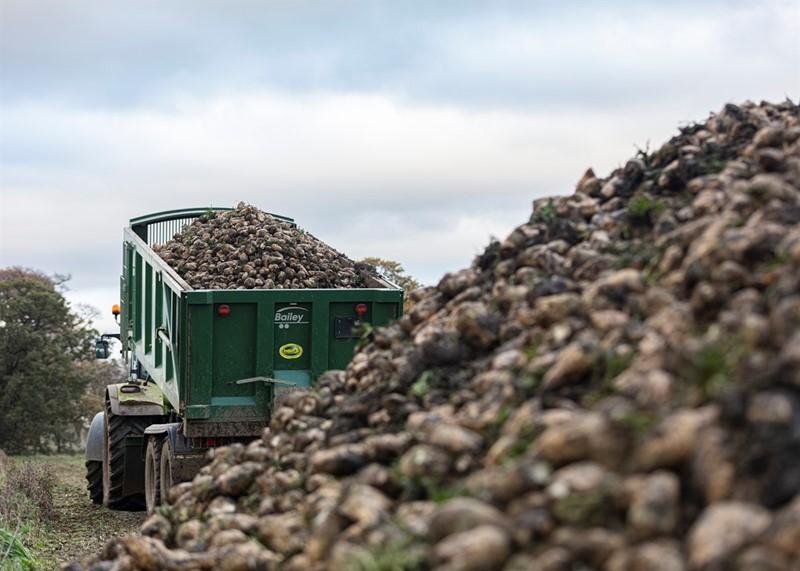 Britain - Sugar beet harvest_76243