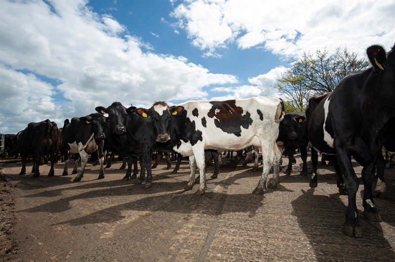 'Team dairy' must work together