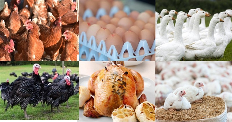 nfu poultry net zero event.png_80727