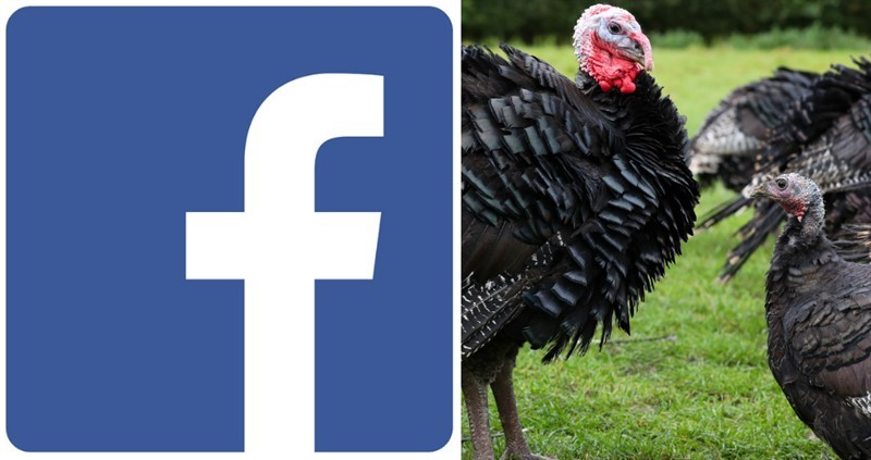 Facebook advertising training for NFU turkey producers_76459