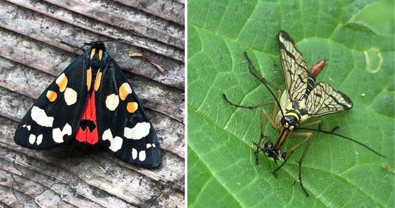 biodiversity day canva_78425