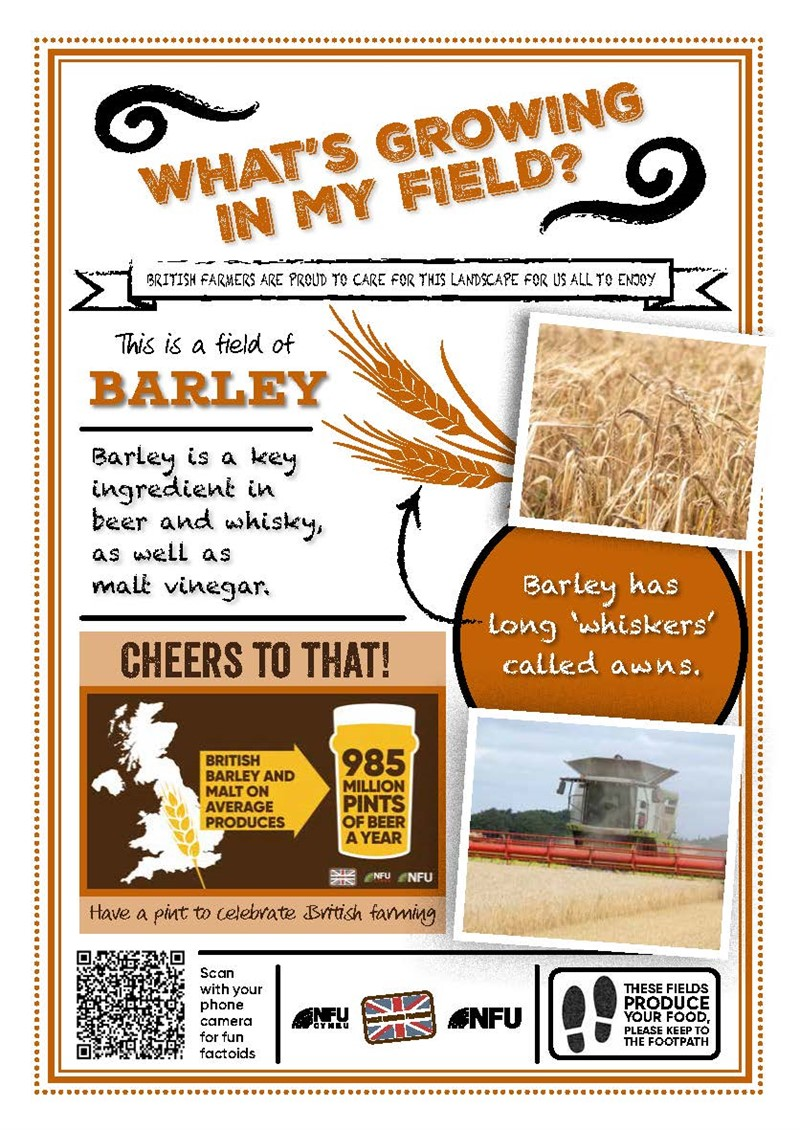 What's growing in my field – Barley