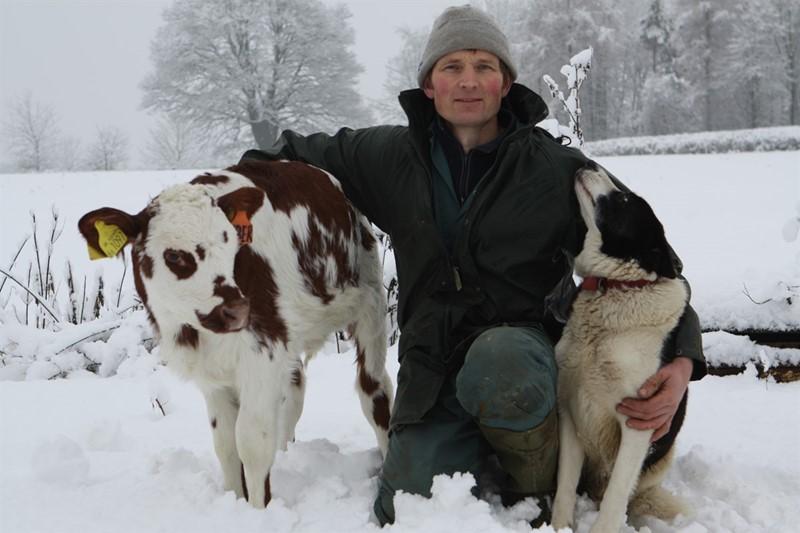 sheepdog Roddy and a calf_76396