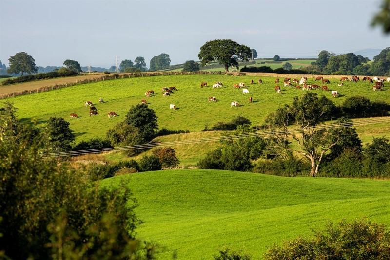 strickley-farm-013_80569