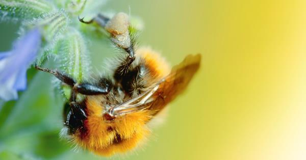 Neonicotinoids: Major gaps and limited evidence