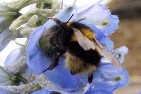 Signs of a bee recovery should have us all buzzing