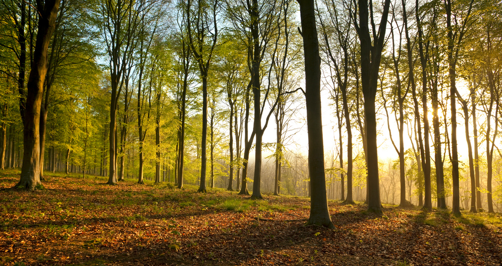 Apply now for new woodland grants